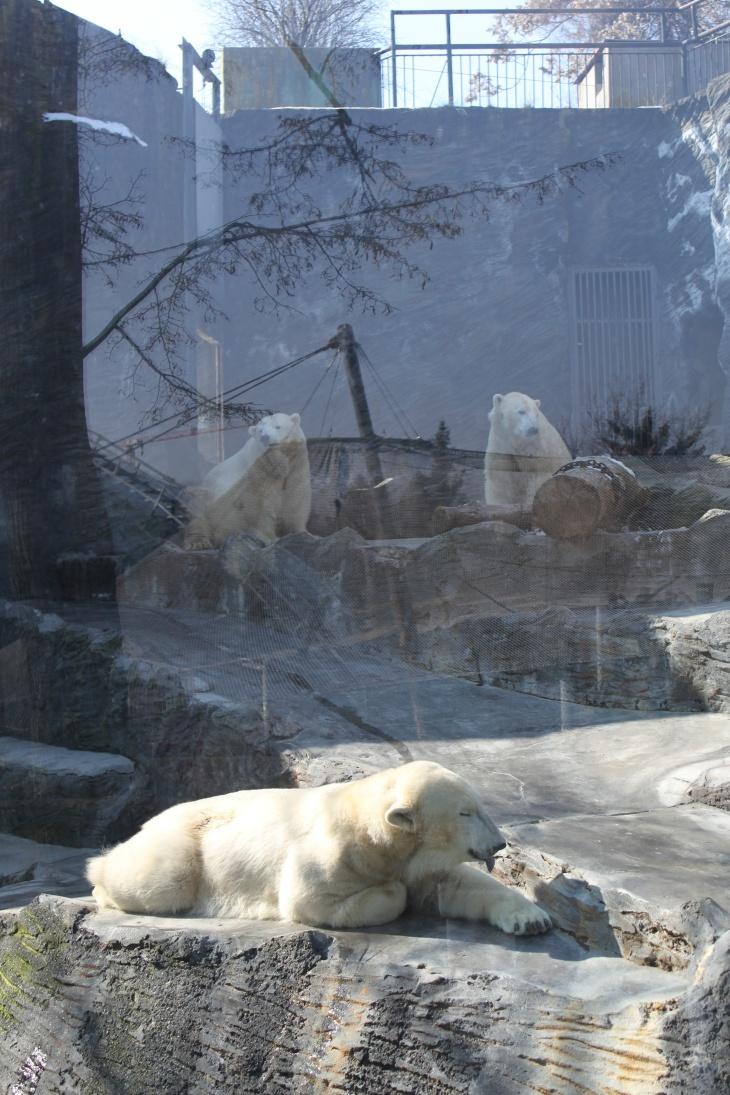 Polar Bears!